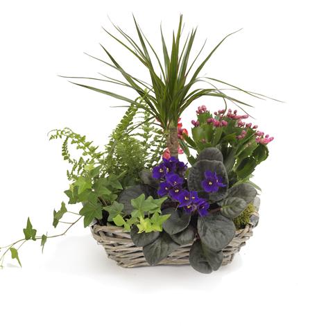 panier de plantes dans une vannerie. Black Bedroom Furniture Sets. Home Design Ideas